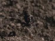 Amazing-animals-activity-center-black-widow