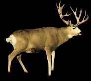 Beast blender white-tailed deer