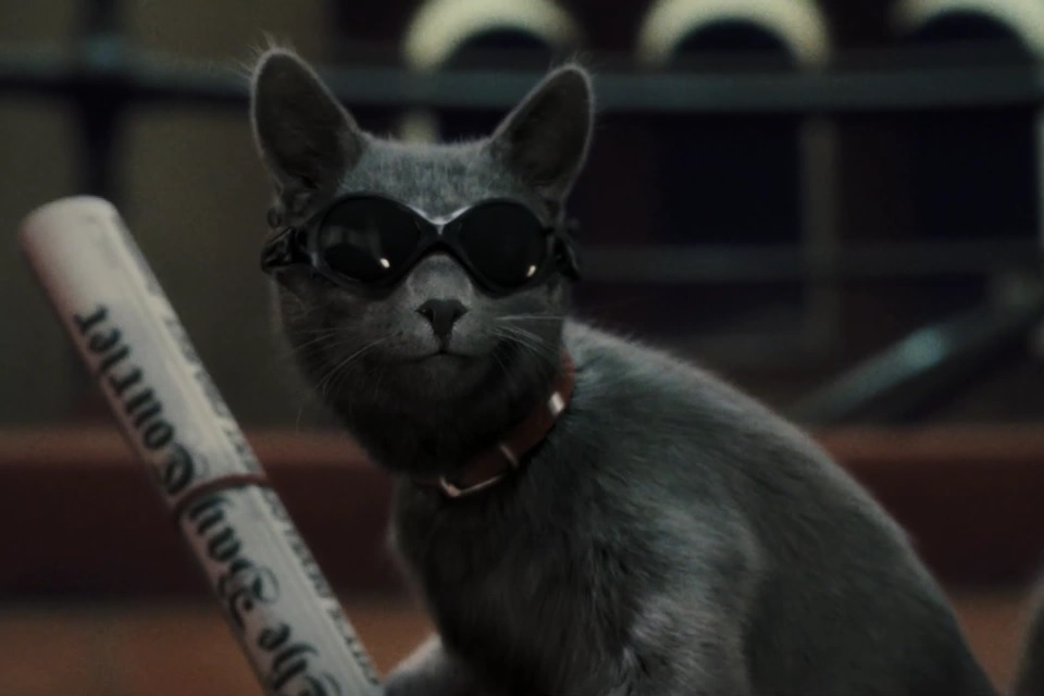 Catherine (Cats and Dogs)