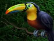 Jumpstart Toucan