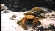 Mysteries of the Deep Hermit Crab