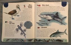 Ocean Life Dictionary (3).jpeg