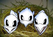 Pelican Chicks.jpg