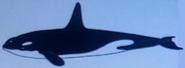 Batw-animal encyclopedia-orca
