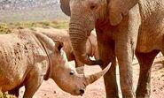 Botswana Elephant and Rhino