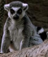 Bronyx Zoo TV Series Lemur