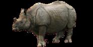 Indian Rhino (Transparent Image)