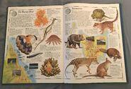 The Animal Atlas (25)