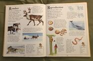 The Kingfisher First Animal Encyclopedia (58)