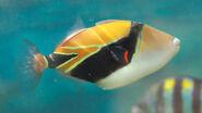Triggerfish, Reef