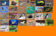 Animal Alphabet 9