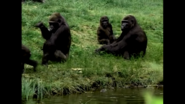 Animal Atlas Gorilla