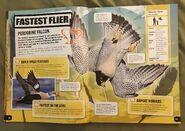 Animal Record Breakers (4)