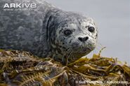 Common-seal