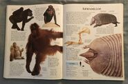 DK Encyclopedia Of Animals (39)