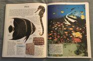 DK Encyclopedia Of Animals (77)