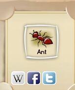 IMG ant