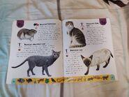 Pet Dictionary (21)