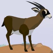 Roan Antelope WOZ