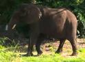 SML Elephant