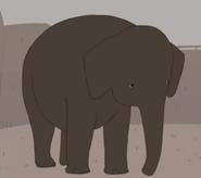 Smitha Minda Elephant
