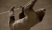 TSLoTZ Sloth