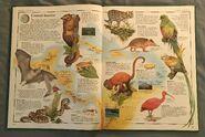 The Animal Atlas (6)
