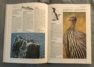 The Kingfisher Illustrated Encyclopedia of Animals (66)