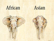 Tuscon Elephants