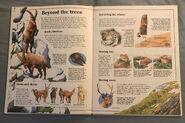 Usborne World Wildlife- Mountain Wildlife (2)