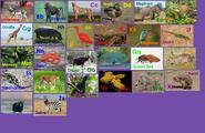 Animal Alphabet 2