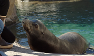 CITIRWN Sea Lion