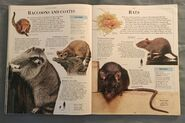 DK Encyclopedia Of Animals (135)