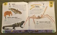 Extreme Animals Dictionary (12)