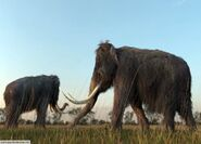 Male and Female Woolly Mammoths