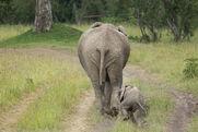 Mamma Elephants