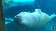 Oh Shitake Mushrooms Walrus