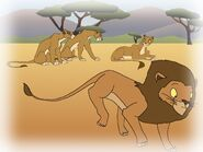 The male lion decided to hunt while the females stayed behind