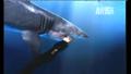 UTAUC Shark