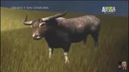 UTAUC Water Buffalo