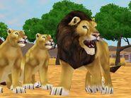Zt2-lion