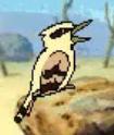 Blinky bills ghost cave - kookaburra