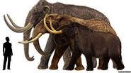 Columbian-mammoths-vs-modern-african-elephants-wooly-mammoths