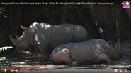 Maryland Zoo Rhinos