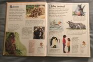 The Kingfisher First Animal Encyclopedia (6)