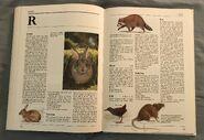 The Kingfisher Illustrated Encyclopedia of Animals (128)