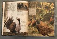 Birds (Eye Wonder) (4)