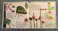Bugs A-Z (6)