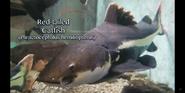 Cleveland Metroparks Zoo Catfish