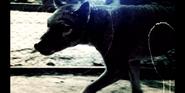 EOL Thylacine
